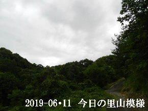 2019-06・11 今日の里山模様・・・ (8).JPG