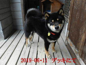 2019-06・11 今日の麻呂 (1).JPG