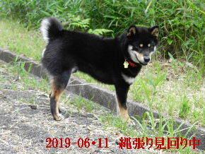 2019-06・11 今日の麻呂 (3).JPG
