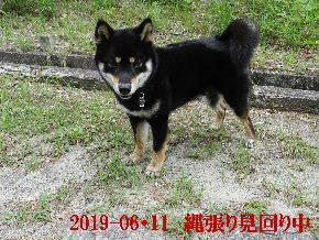 2019-06・11 今日の麻呂 (5).JPG