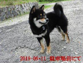 2019-06・11 今日の麻呂 (7).JPG
