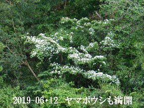 2019-06・12 今日の出遭い・・・ (1).JPG