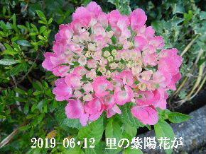 2019-06・12 今日の出遭い・・・ (2).JPG