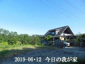 2019-06・12 今日の里山模様・・・ (1).JPG