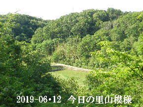 2019-06・12 今日の里山模様・・・ (3).JPG