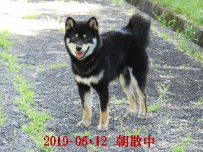 2019-06・12 今日の麻呂 (5).JPG