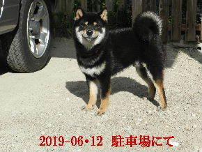 2019-06・12 今日の麻呂 (9).JPG