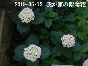 2019-06・12 我が家の庭で・・・ (1).JPG