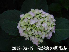 2019-06・12 我が家の庭で・・・ (2).JPG