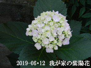 2019-06・12 我が家の庭で・・・ (3).JPG