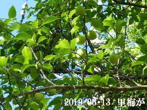 2019-06・13 今日の出遭い・・・ (1).JPG