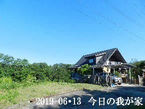 2019-06・13 今日の里山模様・・・ (1).JPG