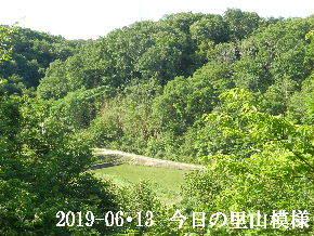 2019-06・13 今日の里山模様・・・ (3).JPG