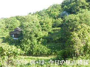 2019-06・13 今日の里山模様・・・ (4).JPG