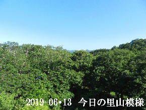 2019-06・13 今日の里山模様・・・ (5).JPG