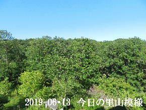 2019-06・13 今日の里山模様・・・ (6).JPG