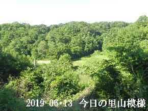 2019-06・13 今日の里山模様・・・ (7).JPG