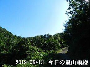2019-06・13 今日の里山模様・・・ (8).JPG