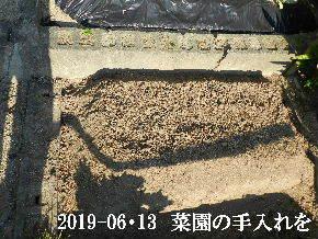 2019-06・13 我が家のスナップ・・・ (1).JPG