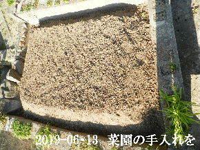 2019-06・13 我が家のスナップ・・・ (2).JPG