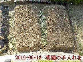 2019-06・13 我が家のスナップ・・・ (3).JPG