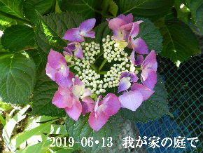 2019-06・13 我が家のスナップ・・・ (5).JPG