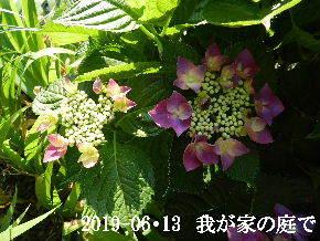 2019-06・13 我が家のスナップ・・・ (6).JPG