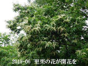 2019-06・14 今日の出遭い・・・ (1).JPG