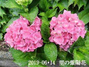 2019-06・14 今日の出遭い・・・ (3).JPG