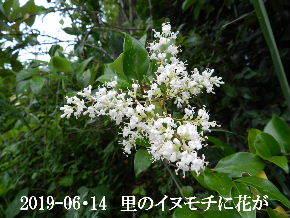 2019-06・14 今日の出遭い・・・ (6).JPG