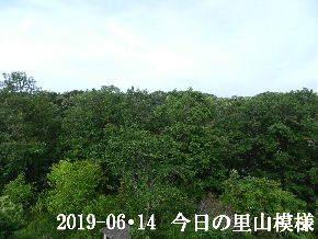 2019-06・14 今日の里山模様・・・ (6).JPG