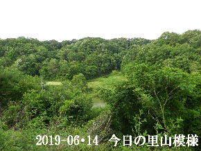 2019-06・14 今日の里山模様・・・ (7).JPG