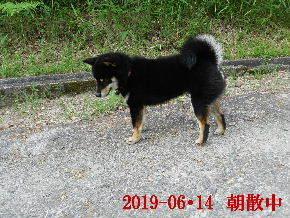 2019-06・14 今日の麻呂 (2).JPG