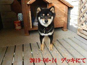 2019-06・14 今日の麻呂 (6).JPG