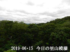 2019-06・15 今日の里山模様・・・ (5).JPG
