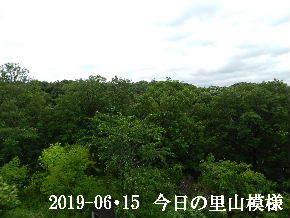 2019-06・15 今日の里山模様・・・ (6).JPG
