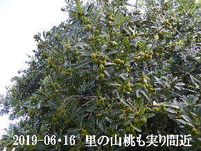 2019-06・16 今日の出遭い・・・ (12).JPG