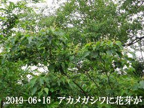 2019-06・16 今日の出遭い・・・ (4).JPG