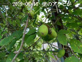 2019-06・16 今日の出遭い・・・ (9).JPG