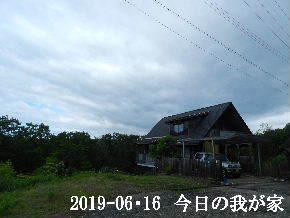 2019-06・16 今日の里山模様・・・ (1).JPG