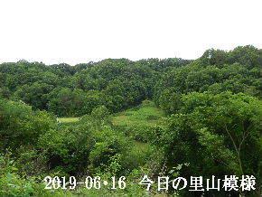 2019-06・16 今日の里山模様・・・ (4).JPG