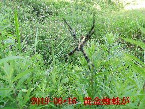 2019-06・16 里山の生物達・・・ (1).JPG