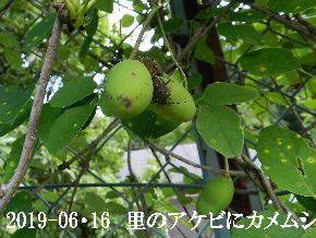 2019-06・16 里山の生物達・・・ (2).jpg