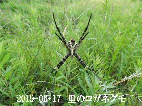 2019-06・17 里の生物達・・・ (7).JPG