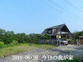 2019-06・20 今日の里山模様・・・ (1).JPG
