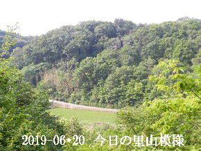 2019-06・20 今日の里山模様・・・ (3).JPG