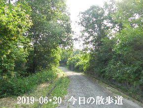 2019-06・20 今日の里山模様・・・ (5).JPG
