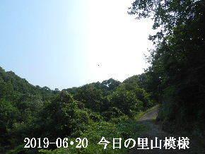 2019-06・20 今日の里山模様・・・ (7).JPG