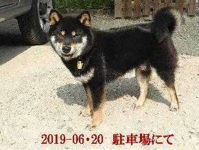 2019-06・20 今日の麻呂 (6).JPG