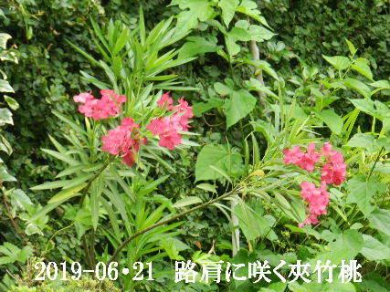 2019-06・21 今日の出遭い・・・ (3).JPG